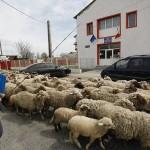 Protest Cilibia1